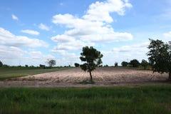 Weiden en blauwe hemel stock foto
