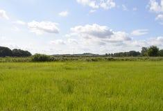 Weiden en bomen onder een blauwe hemel met witte wolken en een spoorwegdijk bij ho Royalty-vrije Stock Afbeeldingen