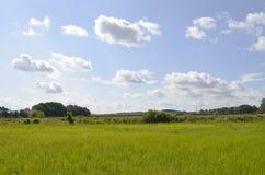 Weiden en bomen op het Oostzeeeiland Usedom, Duitsland, onder een blauwe hemel met witte wolken en een spoorwegdijk bij ho Stock Foto's