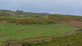Weiden en dfields met shrubson de klippen op de Noordzeekust van howth, Ierland stock foto