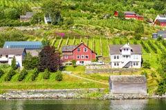 Weiden en dorp op Hardanger Fiord Royalty-vrije Stock Afbeelding