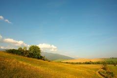 Weiden en fielda met weg Stock Foto's