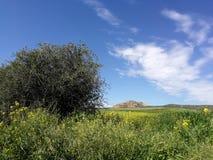 Weiden en gebieden in de lente royalty-vrije stock foto's