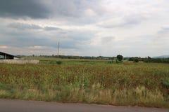 Weiden en grijze hemel royalty-vrije stock afbeelding