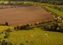 Weiden, famsland en gronden met koeien die hierboven worden gezien van Royalty-vrije Stock Fotografie