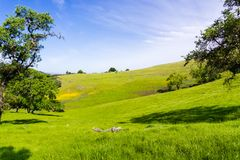 Weiden in groen gras in de onlangs geopende Rancho San Vicente Open Space Preserve, een deel worden behandeld van Calero-het Park royalty-vrije stock fotografie