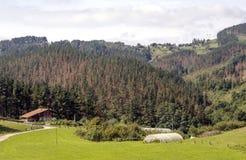 Weiden in landelijk dorp stock afbeelding