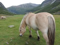 Weiden lassen des Pferds Stockbild