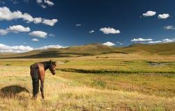 Weiden lassen des Pferds Stockfotos