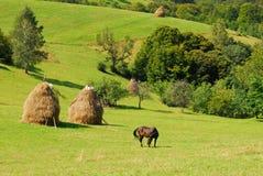 Weiden lassen des Pferds auf schönen grünen Hügeln Stockfotos