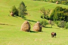 Weiden lassen des Pferds auf schönen grünen Hügeln Stockbilder