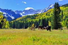 Weiden lassen des Pferds in der alpinen Landschaft während der Laubjahreszeit Stockfoto