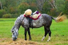Weiden lassen des Pferds Grünes Gras, Herbstwaldhintergrund Stockfotografie