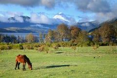 Weiden lassen des Pferds Lanin im Nationalpark Stockbild