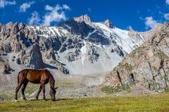 Weiden lassen des Pferds am sonnigen Tag in den hohen schneebedeckten Bergen Lizenzfreies Stockfoto