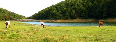 Weiden lassen durch das Wasser (1) stockfotos
