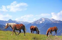 Weiden lassen von Pferden in der alpinen Landschaft lizenzfreies stockbild