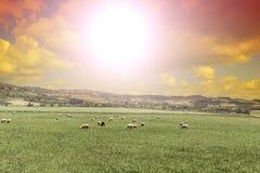 Weiden lassen von Schafen in Sizilien bei Sonnenaufgang Lizenzfreie Stockfotografie