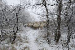 Weiden lassende Schafe Stockbilder