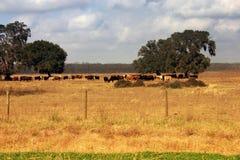 Weiden lassendes Land Lizenzfreie Stockfotos