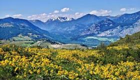 Weiden met Valkruidbloemen, windende weg en bergen royalty-vrije stock foto's