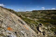 Weiden Nationaal Park Stock Afbeeldingen