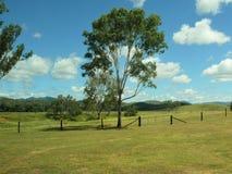 Weiden Sie Landschaft mit Bäumen und Zäunen in Ost-Australien mit den Bergen, die im unscharfen Hintergrund liegen Lizenzfreie Stockbilder