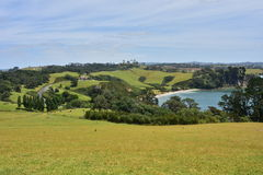 Weiden um Auckland in Neuseeland Stockbilder