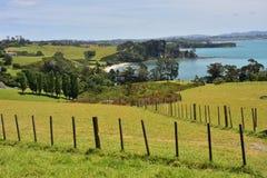 Weiden um Auckland in Neuseeland Lizenzfreie Stockfotografie