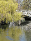 Weiden und Brücke reflektiert im Teich Lizenzfreie Stockfotos