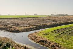 Weiden und Wasser in der Hintergrundbeleuchtung Stockfotos