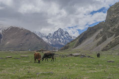 Weiden van de bergen van de Kaukasus, Georgië Stock Foto's