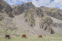 Weiden van de bergen van de Kaukasus, Georgië Royalty-vrije Stock Afbeeldingen