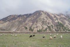 Weiden van de bergen van de Kaukasus, Georgië Royalty-vrije Stock Foto