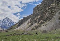 Weiden van de bergen van de Kaukasus, Georgië Royalty-vrije Stock Foto's