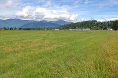 Weiden in Westelijk Canada stock fotografie