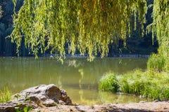 Weidenbäume am See mit Reflexion Stockbild