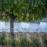 Weidenbaum auf Flussrand Stockfotografie
