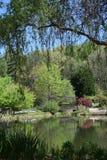Weidenbaum, der über einem Teich mit Brücke hängt Lizenzfreie Stockfotos