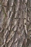 Weidenbaumrinde Lizenzfreies Stockbild