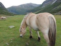 Weidend Paard Stock Afbeelding
