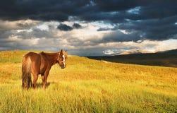 Weidend paard stock afbeeldingen