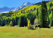 Weidend paard in het alpiene landschap tijdens gebladerteseizoen Stock Afbeeldingen
