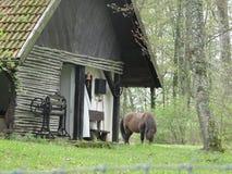 Weidend paard naast een eenzaam landelijk Pools plattelandshuisje in bos Royalty-vrije Stock Afbeelding