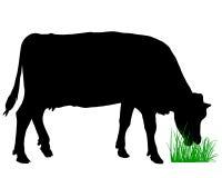 Weidende koe Stock Fotografie