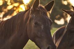 Weidende kudde van paarden in weide stock afbeeldingen