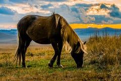 Weidende paarden Royalty-vrije Stock Afbeelding