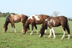 Weidende Paarden stock fotografie