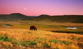 Weidende paarden Stock Afbeeldingen