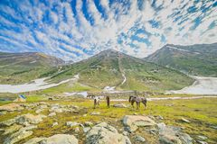 Weidende paarden in de bergen stock afbeeldingen